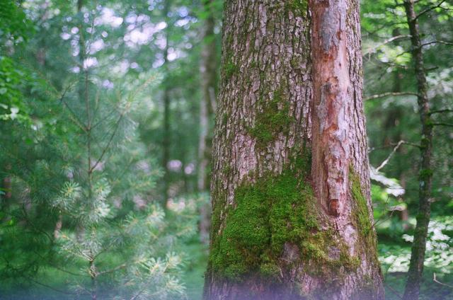 smokey moss
