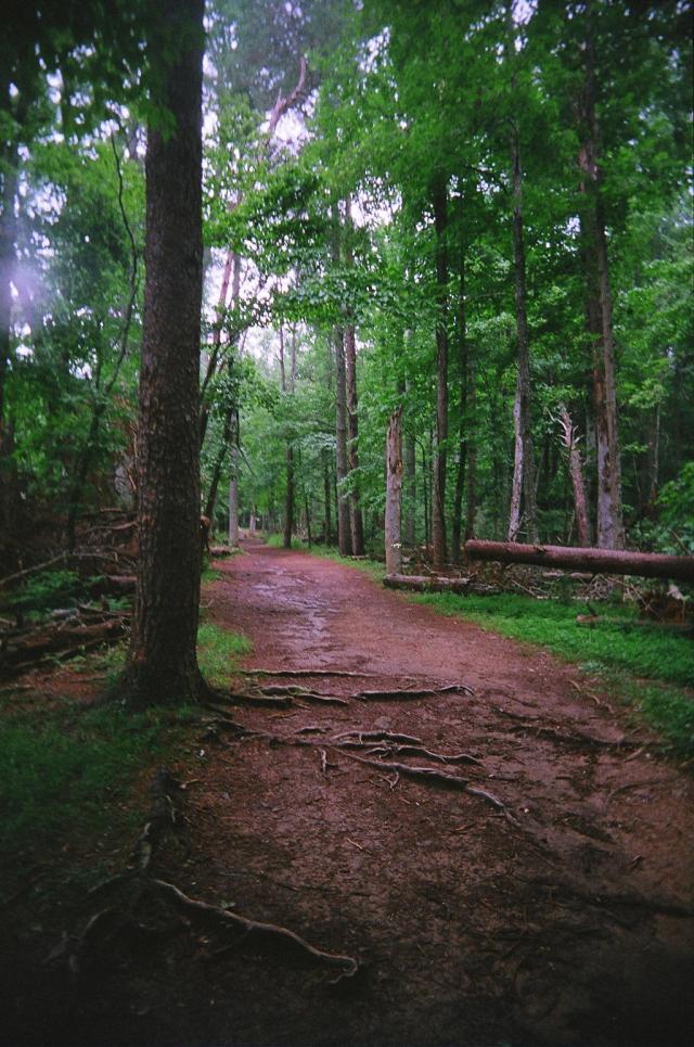 vibrant woods