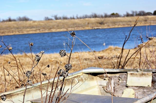 lake grass and boat