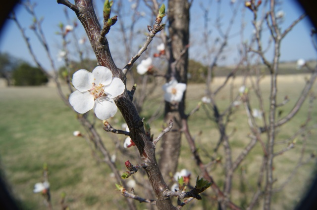 spring blooms at the farm