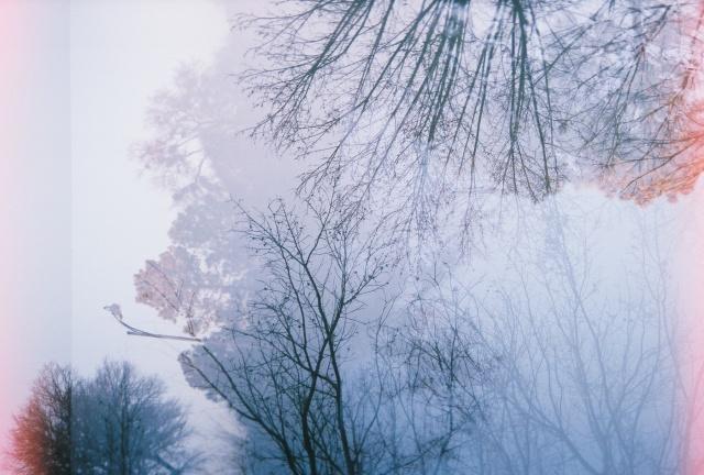 double exposure trees