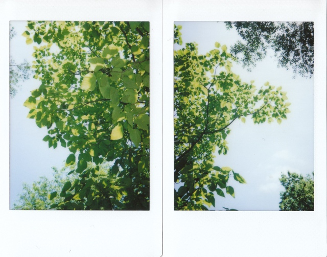 greenTrees_Instax