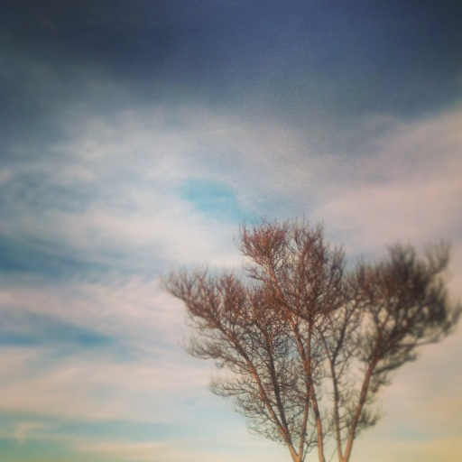 tree and winter skies
