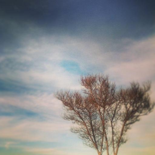 tree and winter skies